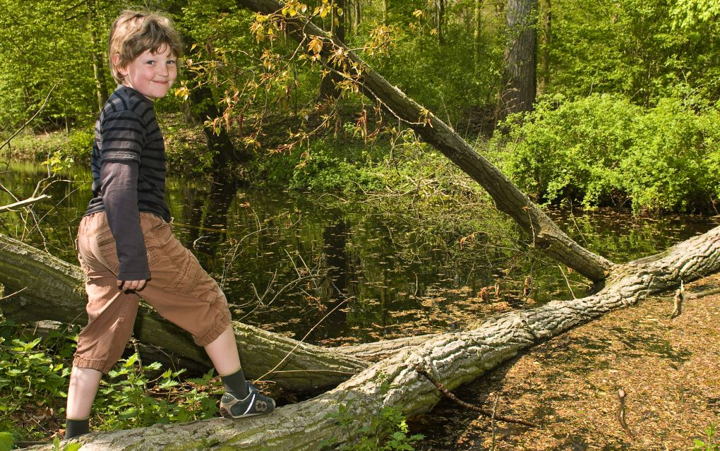 Boy standing on a tree trunk.